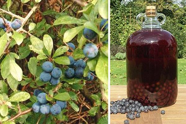 How To Make Sloe Gin >> Sloe Gin Horsmonden Village Kent